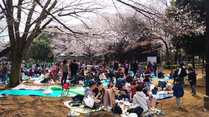 世田谷公園のお花見