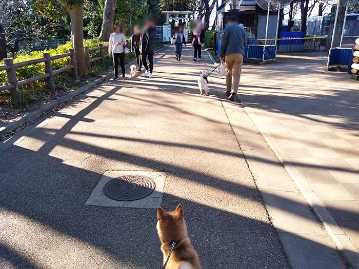 園内には犬を連れた人もたくさん