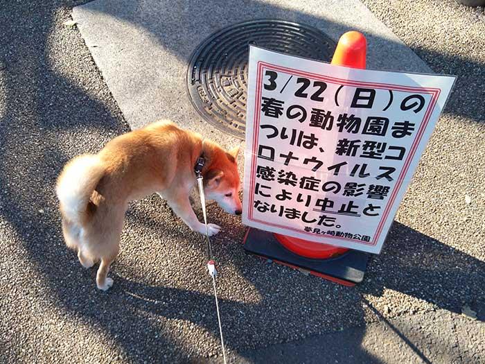 夢見ヶ崎動物公園の春の動物園まつりは中止