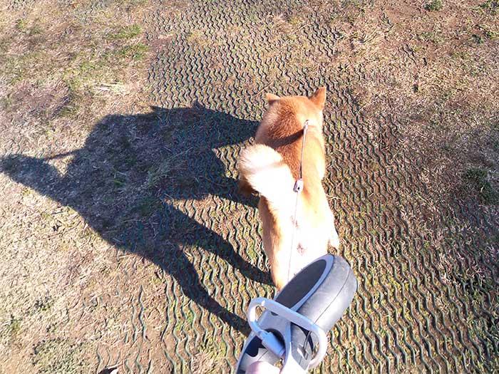 柴犬と動物園