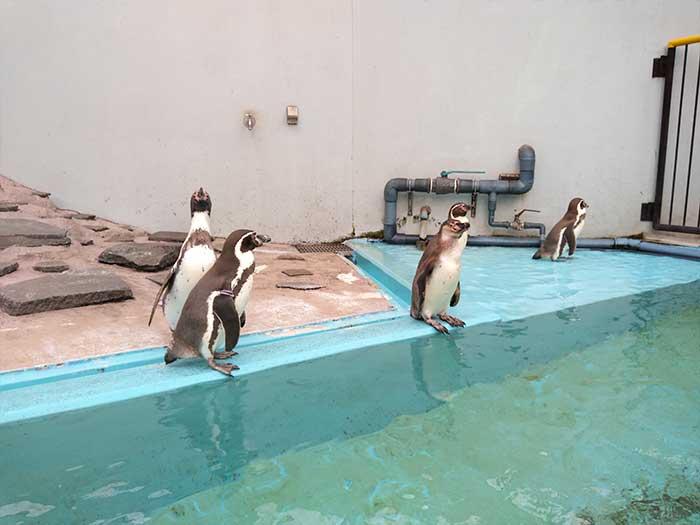 ペンギンもいる無料動物園
