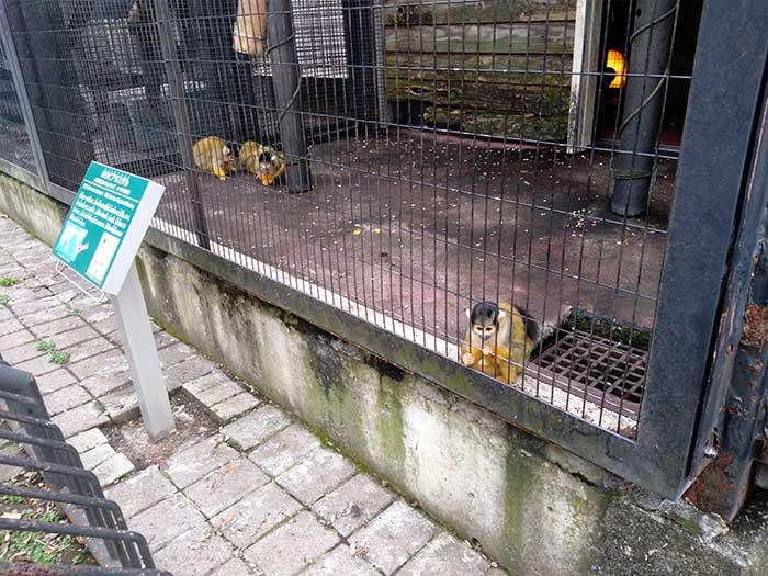 猿のレムール舎