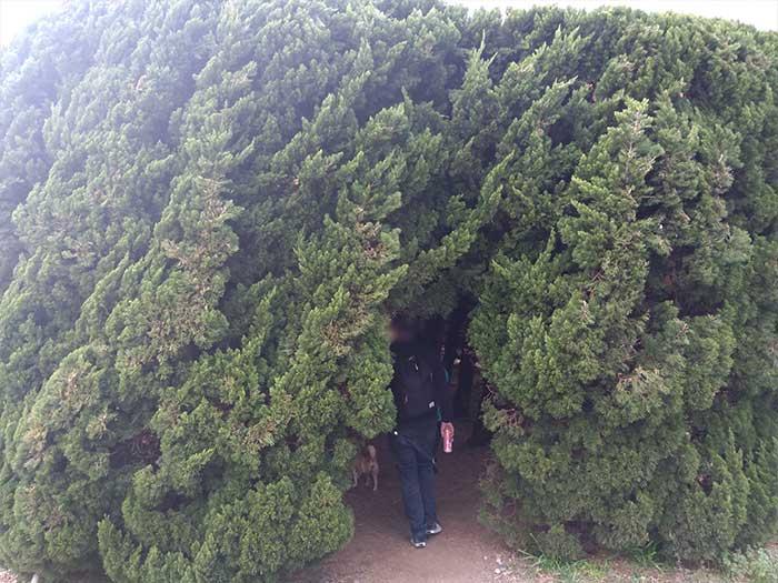 夢見ヶ崎動物公園の木のトンネル