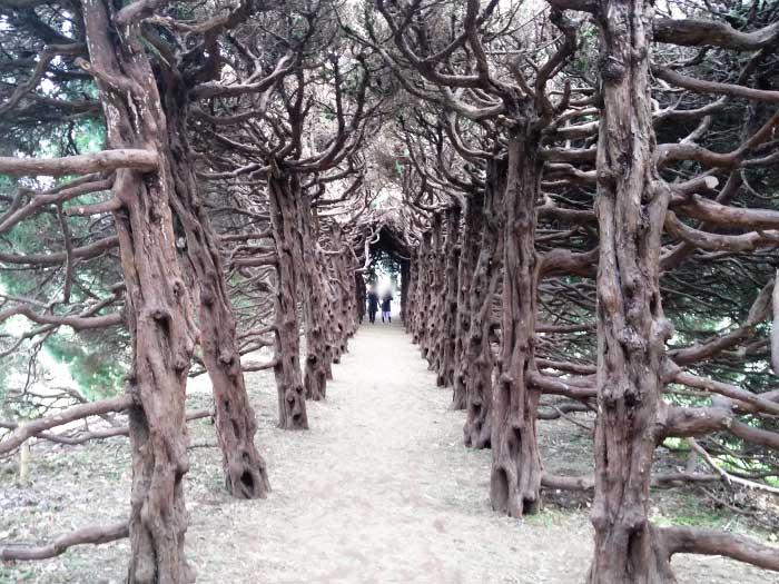 夢見ヶ崎動物公園のの木のトンネル