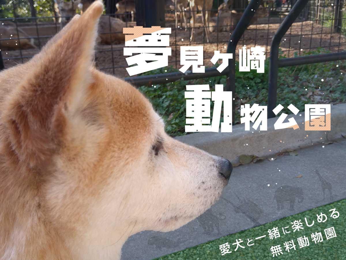 柴犬と一緒に川崎市の夢見ヶ崎動物公園へ!春にはお花見も楽しめる無料のおすすめスポット
